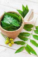 Medicinal neem plant photo
