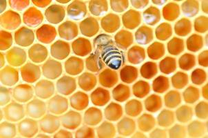 closeup of bee on honeycomb in apiary
