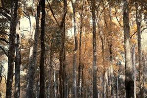 jungle in fall season photo
