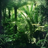 Jungle photo