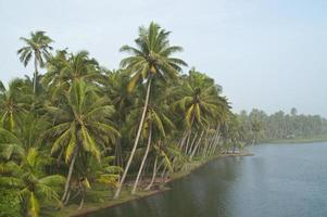 Tropical jungle on the river photo
