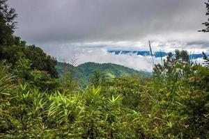 selva foto