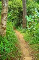 a trilha da selva