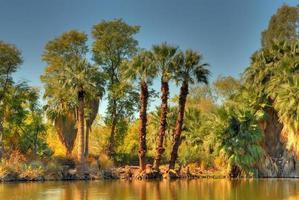lagon de la jungle
