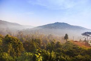 Sunrise in jungle photo
