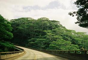 strada della giungla delle Hawaii