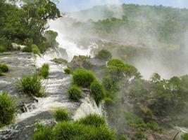 Cascade d'iguassu en amérique du sud jungle tropicale