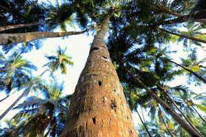 El tronco de la palmera en el exótico primer plano de la selva.