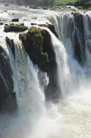 Beautiful nature wild jungle landscape rainforest iguazu waterfalls argentina