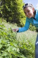 Girl touching stinging nettle leaves photo