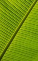 hermosa hoja verde foto