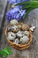 Easter composition with quail eggs and hyacinth