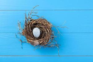 egg in nest photo
