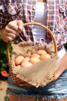 Huevos en cesta de mimbre en manos femeninas al aire libre
