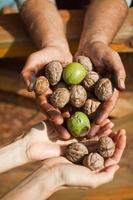 Walnuts in man hands