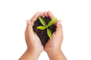 hands holding young plant. Ecology concept photo
