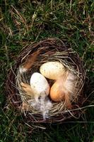 Easter nest with eggs on grass photo