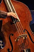 double bass photo