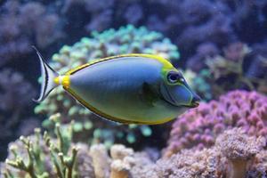 vida marina foto