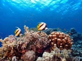 Pair of fish and coral reef photo