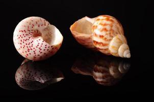 conchas marinas foto