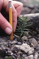 spruce seedlings closeup photo