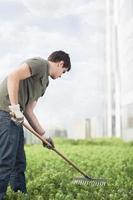 Man gardening green plants on roof top garden in city photo