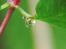 Droplet on stem photo
