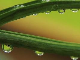 Water stem