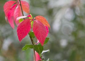 """feuille d """"automne"""