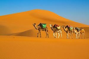Desert caravan photo