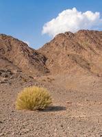 Stone desert photo