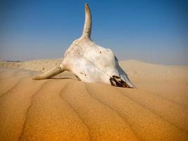 dood in de woestijn