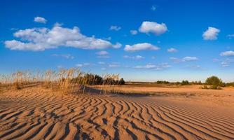 panorama del desierto arenoso foto