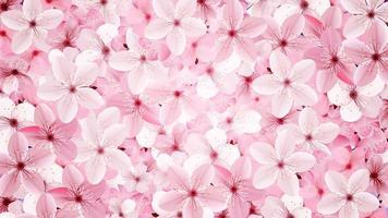 rose floraison rose fleurs de sakura vecteur