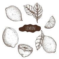 conjunto desenhado à mão limão vetor