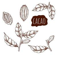 Cacao hand drawn set vector
