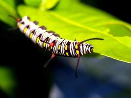 Caterpillar worm in nature