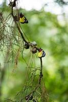 hermosa mariposa. foto