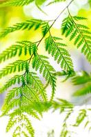 helecho verde