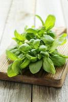 Basil leaves on grey wooden background