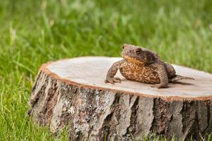 frog on the tree stump