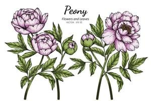 Pink Peony Flowers and Leaves Drawing