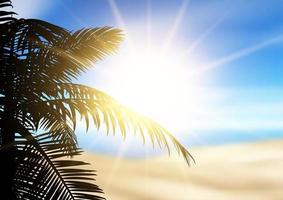 palmeira em uma paisagem de praia desfocada vetor