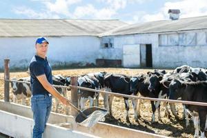 agriculteur travaille à la ferme avec des vaches laitières