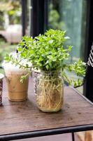 Plants decoration in glass bottle photo