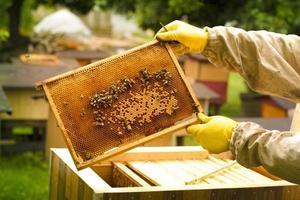imker die een frame van honingraat houdt