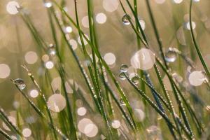 fresco rocío de la mañana en la hierba de primavera foto