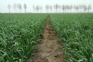 wheat field under the sky photo
