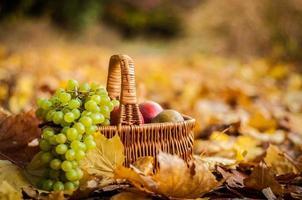 fruit basket on leaves